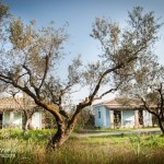 Stay in charming Greek cottages amidst beautiful olive groves