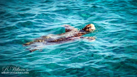turtles_zante_greece