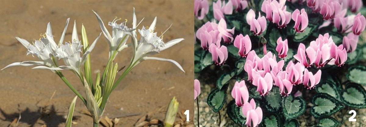 plants of zakynthos