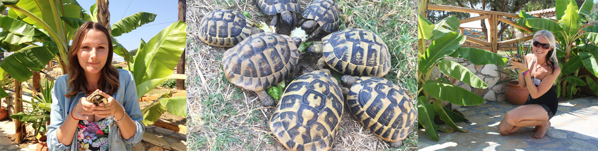 our animals herman tortoises