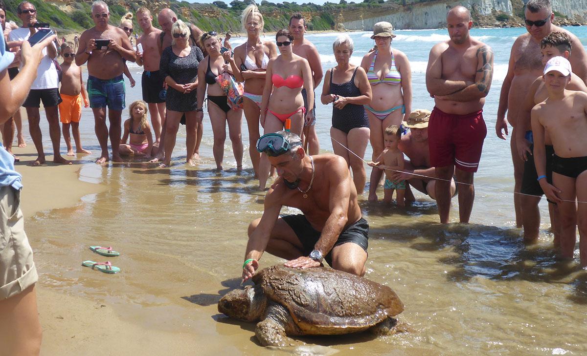 threats  to loggerhead sea turtles